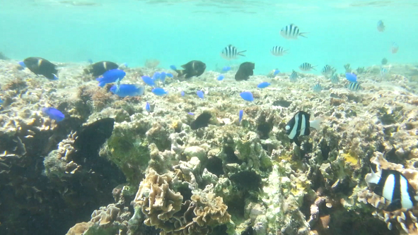 Okinawa Bise Beach where you can swim with tropical fishes [with videos]