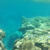 Okinawa beach where you can swim with tropical fish, Bisesaki Beach Reef [with video]