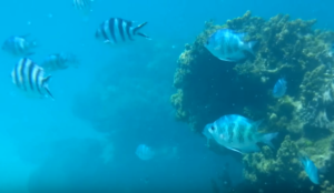 Introducing Sakimotobu Beach you can swim with tropical fish in beautiful Okinawa sea with video