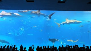 Introduction of good rates of Churaumi Aquarium and videos of whale shark and manta swimming