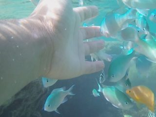 Odo Coast beach you can swim with tropical fish for beginners or children, snorkeling Introduction with underwater video