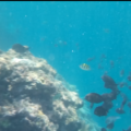 [Underwater video] Snorkeling Odo coast beach reef that gets deeper than 15m