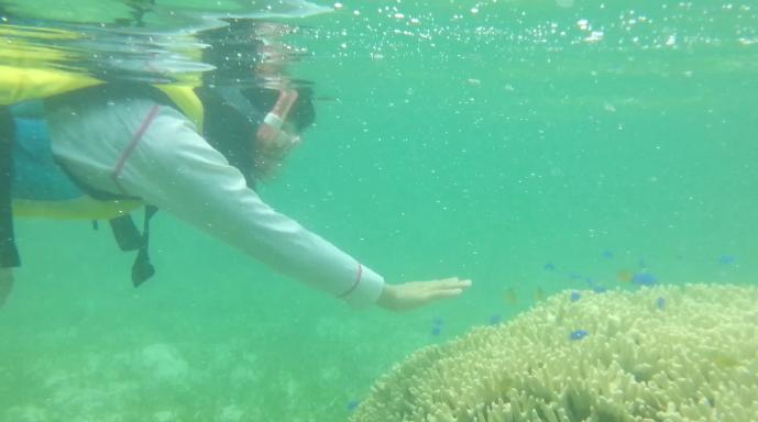 子供も熱帯魚と泳げる一緒に沖縄の海「備瀬崎ビーチ」を動画付きで紹介