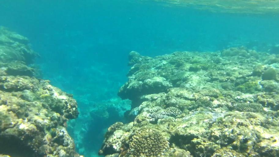 熱帯魚と一緒に泳げる沖縄の海、備瀬崎ビーチ リーフ周辺【動画付】