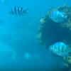 沖縄のきれいな海で熱帯魚と一緒に泳げる崎本部ビーチを動画付きで紹介