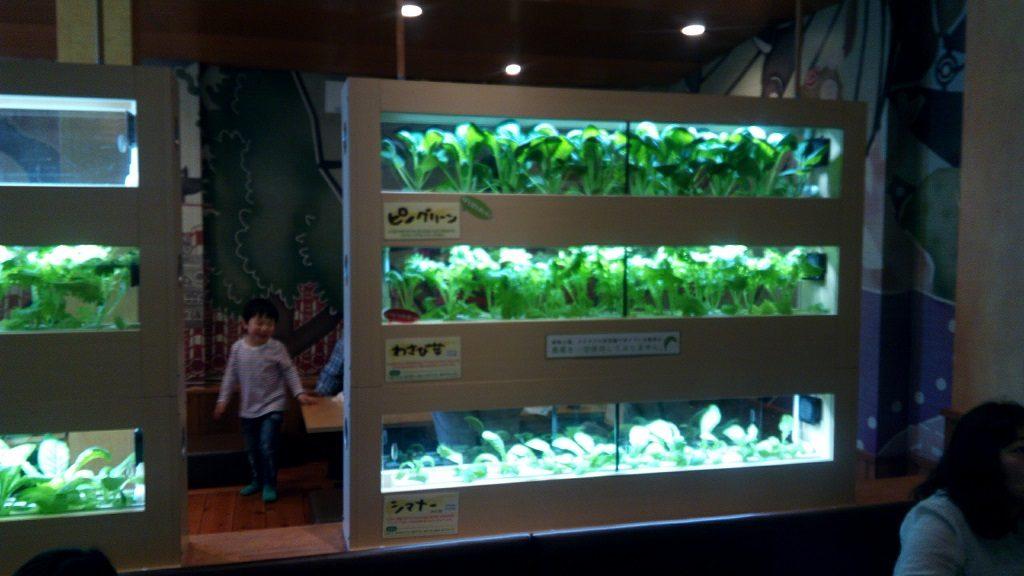 カラカラの店内のグリーン工場2