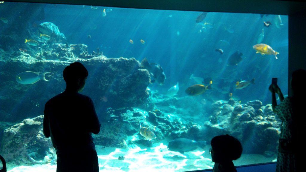 美ら海水族館の水槽2