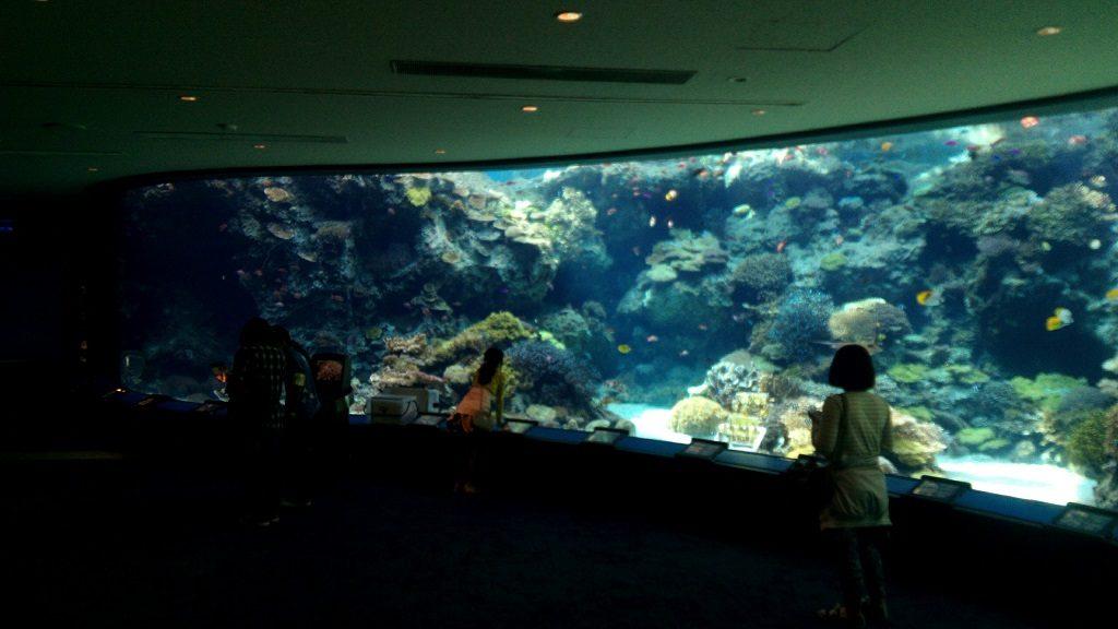 美ら海水族館で最初に目にするサンゴ礁の水槽