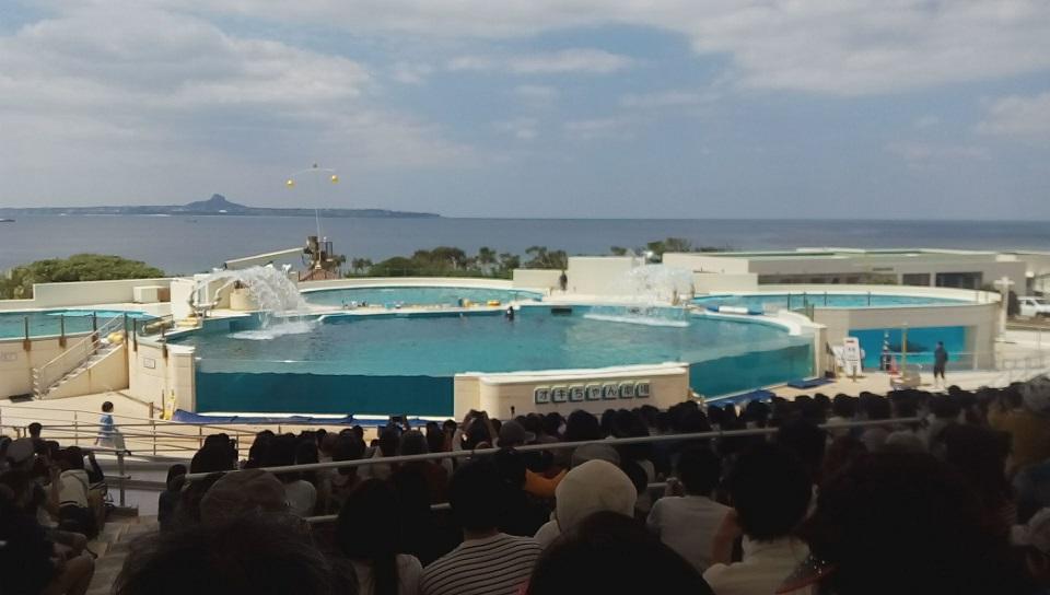 海洋博公園のイルカショーオキちゃん劇場