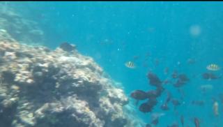 【水中動画付き】水深15m以上一気に深くなる沖縄の大度浜海岸リーフ付近でシュノーケリング