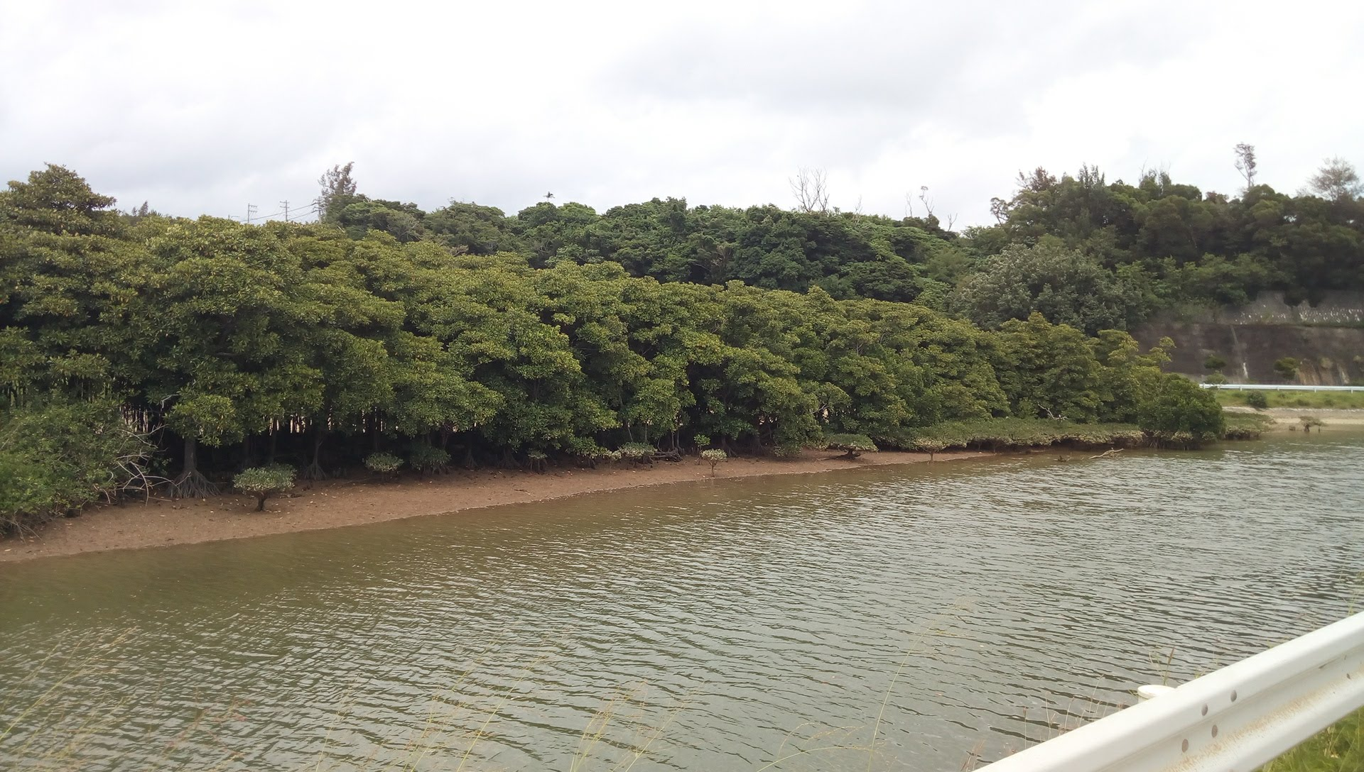 mangrove forest in the river in front of the Tamaya