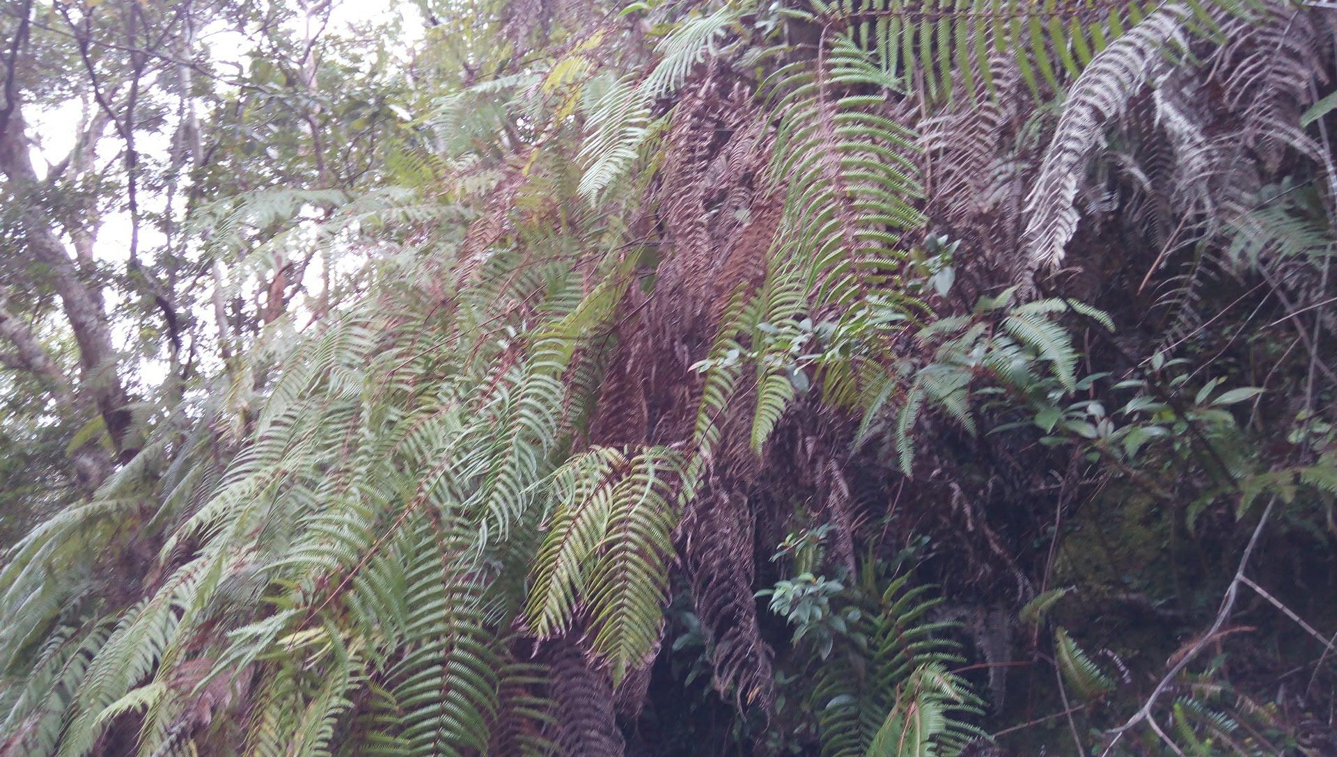 国頭トレイルウォークで見かけた植物 1