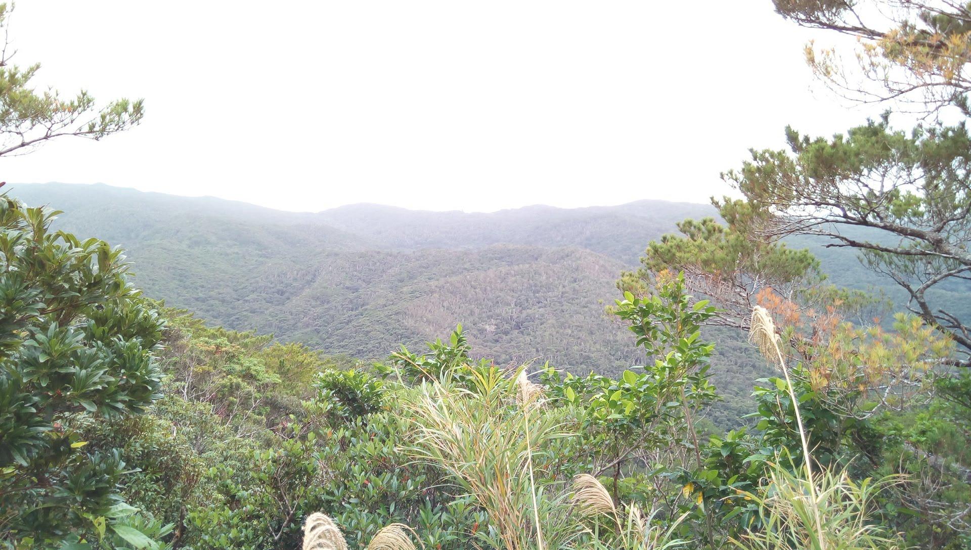 国頭トレイルウォークで見かけたやんばるの森の風景 5