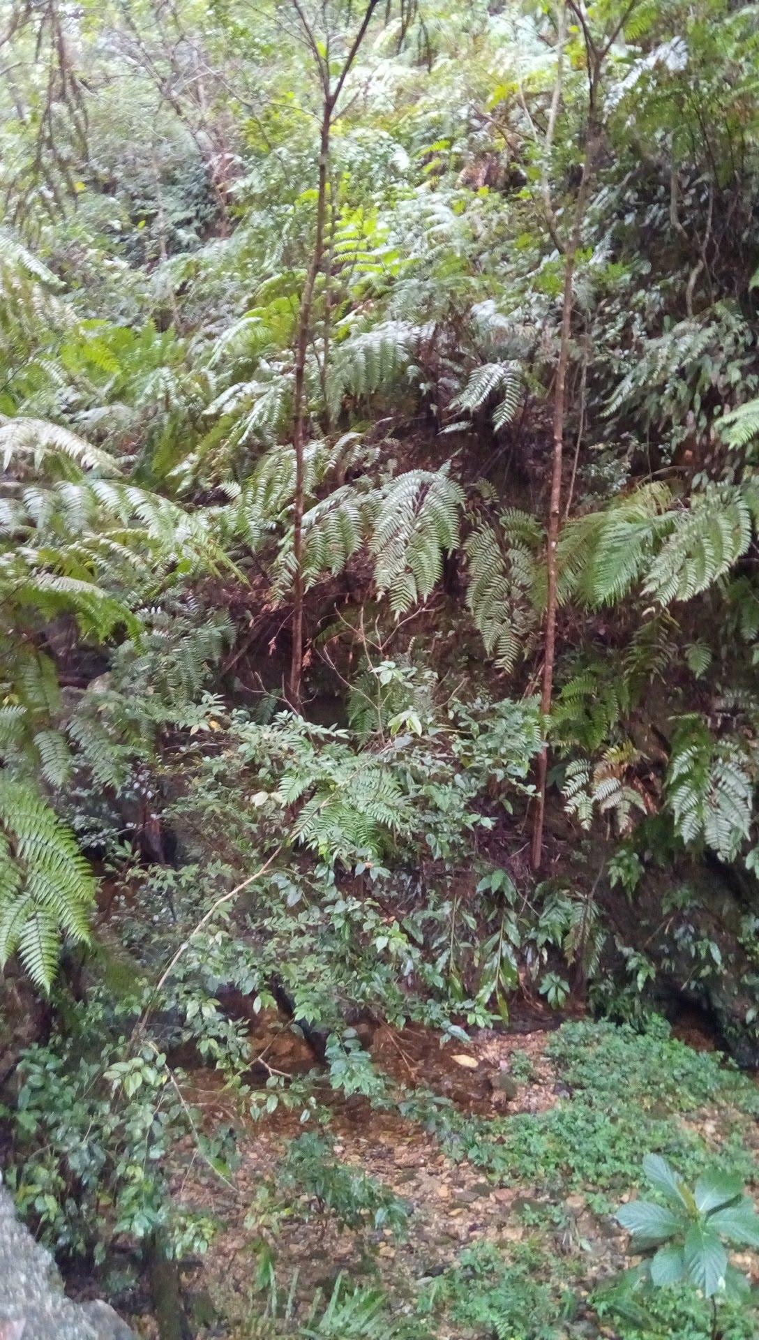 国頭トレイルウォークで見かけた植物 3