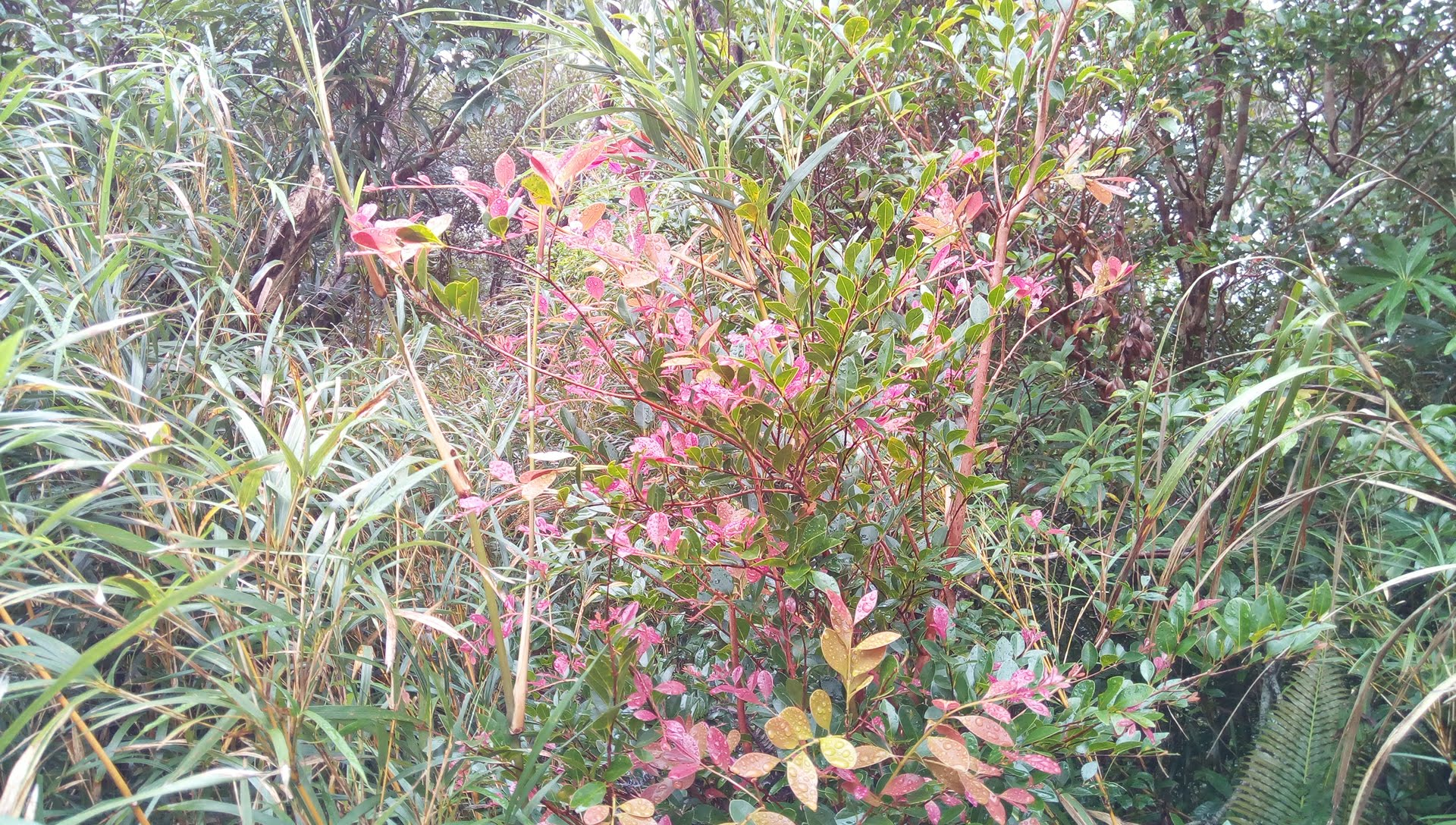 Plants I saw at the Kunigami Trail Walk 6