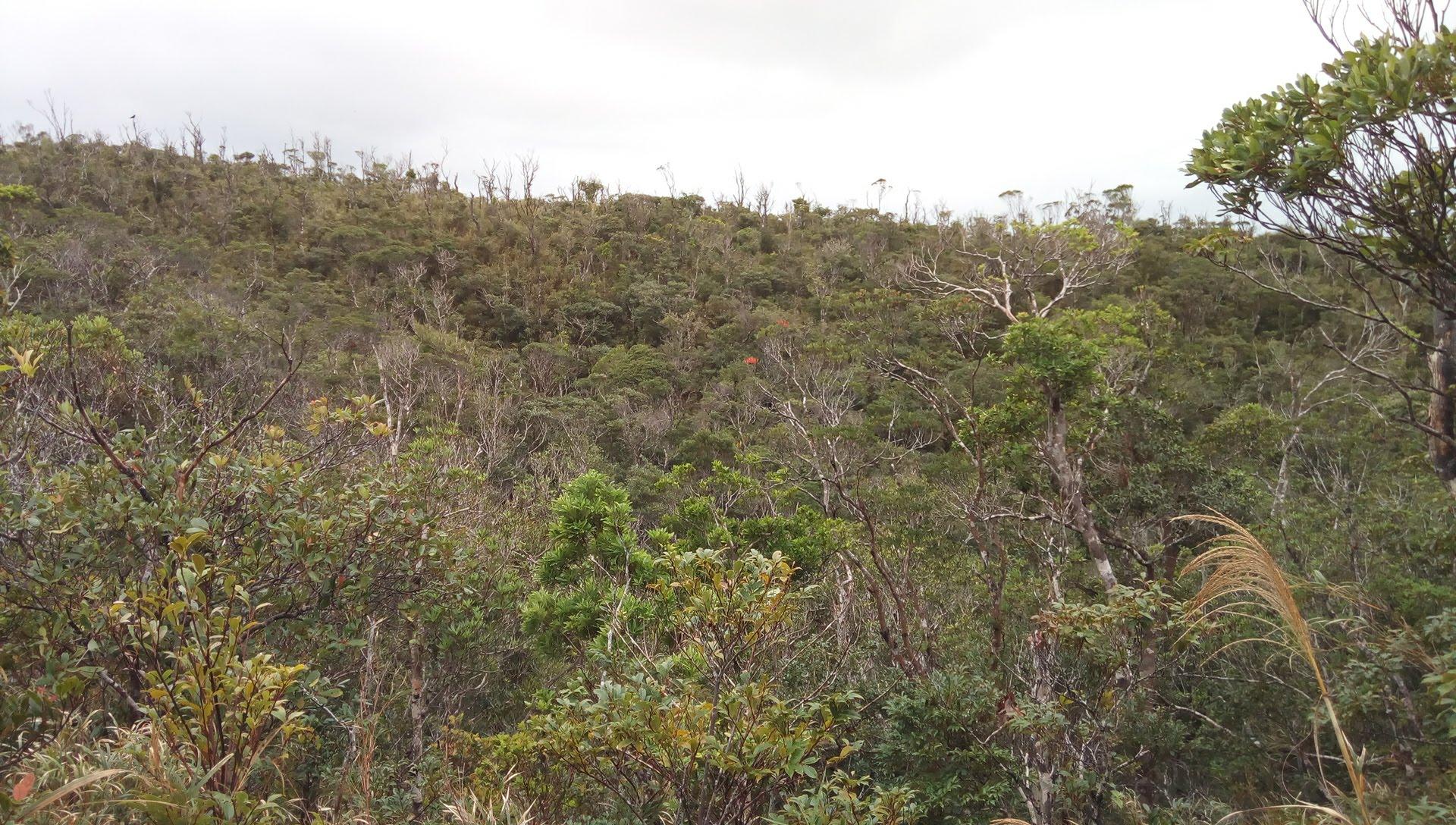 国頭トレイルウォークで見かけたやんばるの森の風景 2