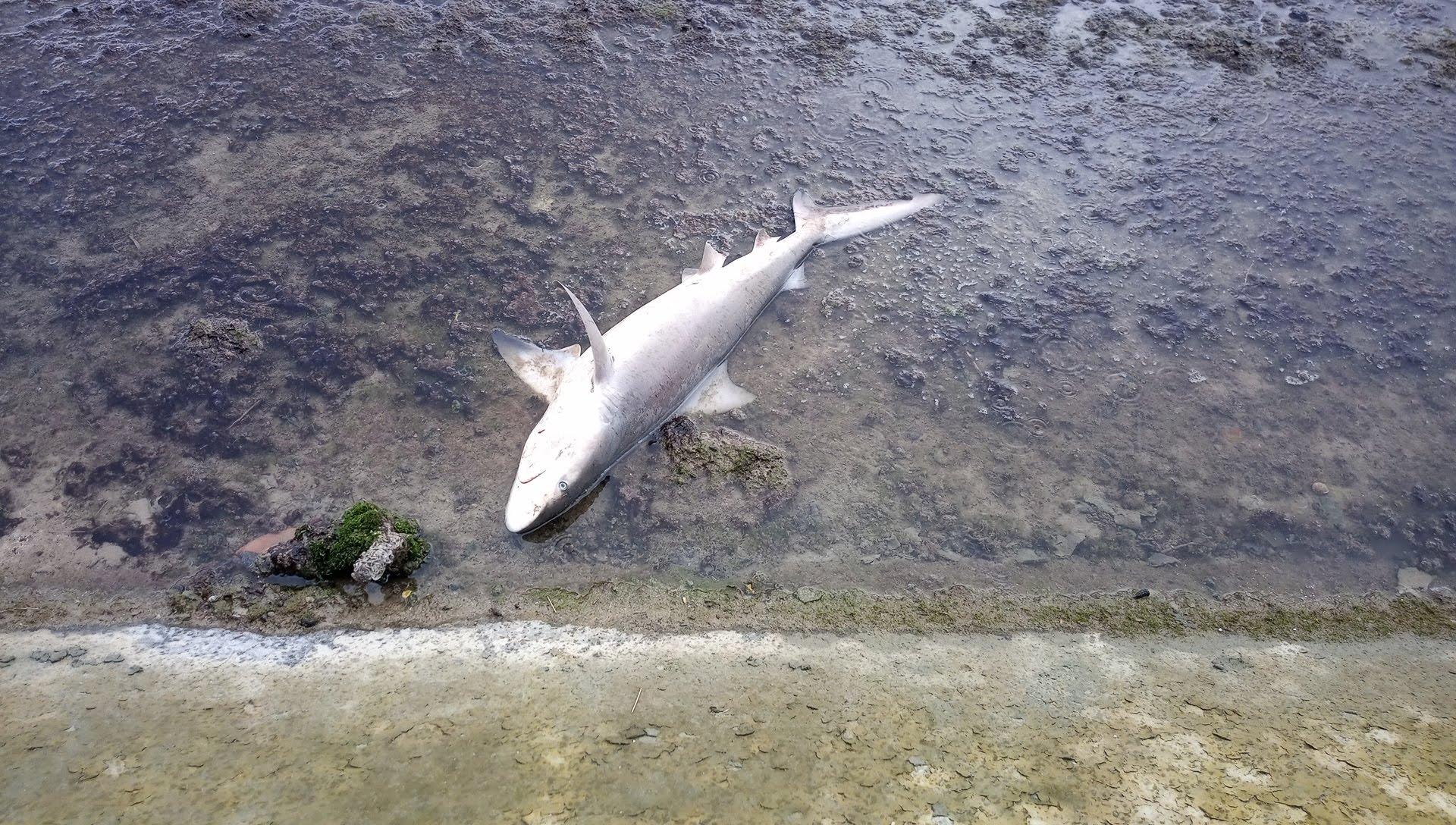 海沿いで見つけた死んだサメ