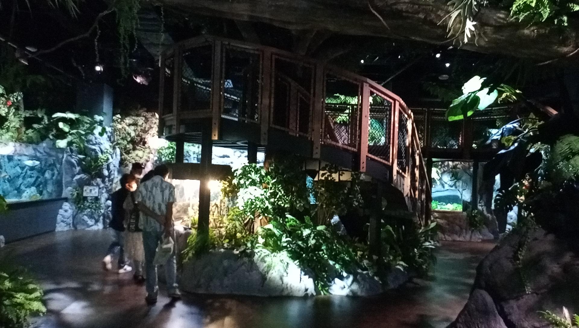 DMMかりゆし水族館入ったら最初は熱帯の雰囲気