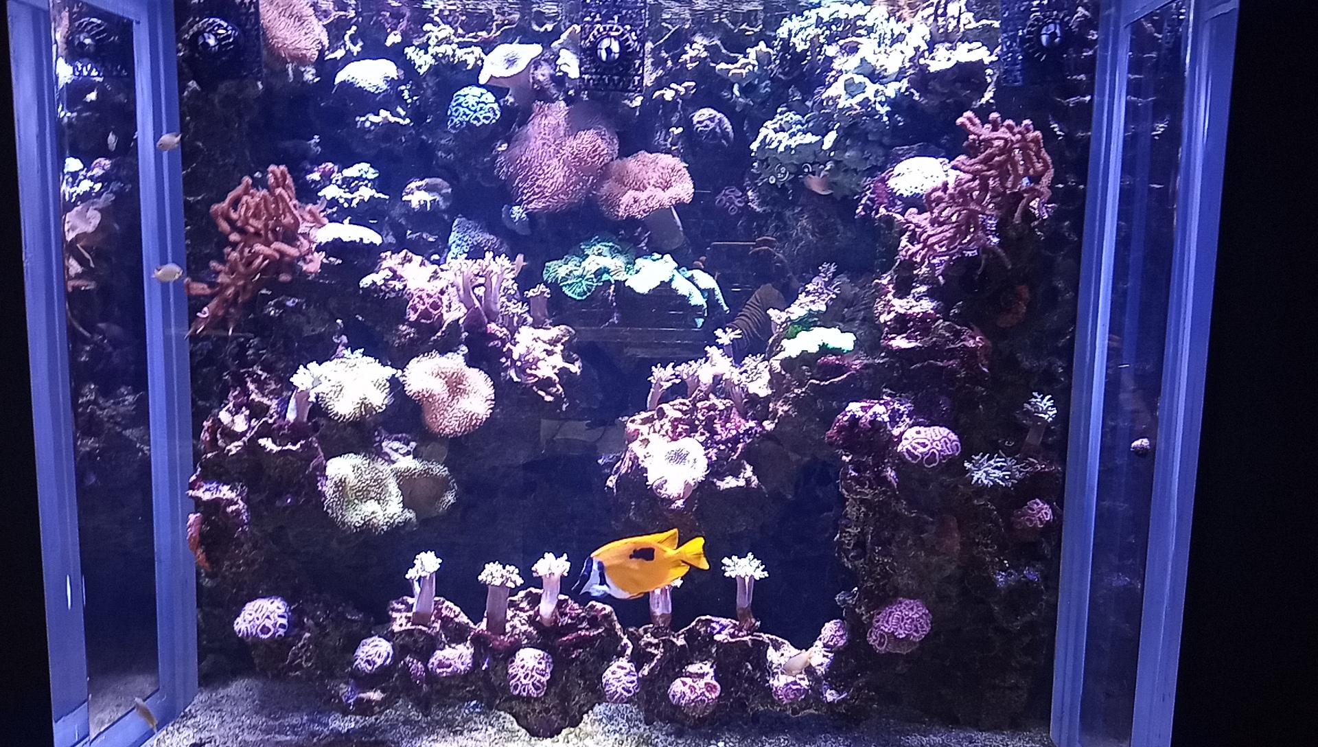 DMMかりゆし水族館の1階の海水水槽2