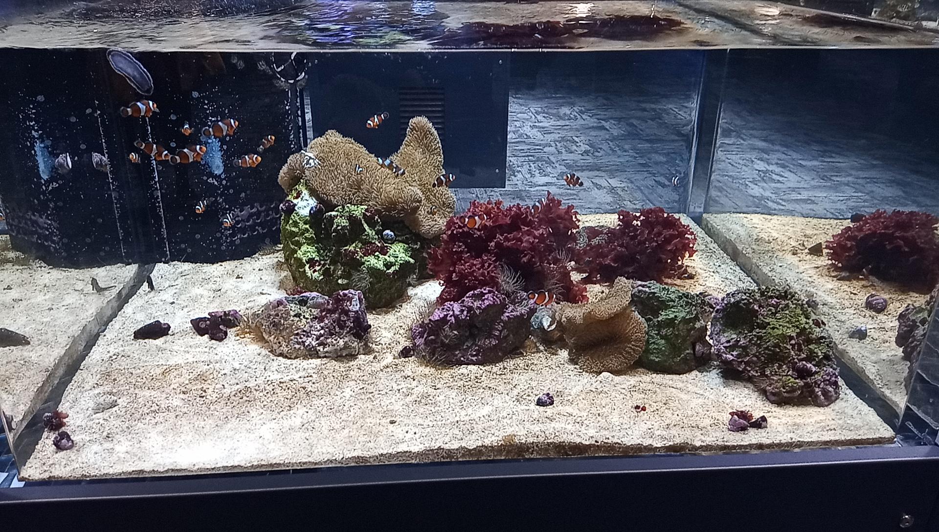 DMMかりゆし水族館の1階の海水水槽4