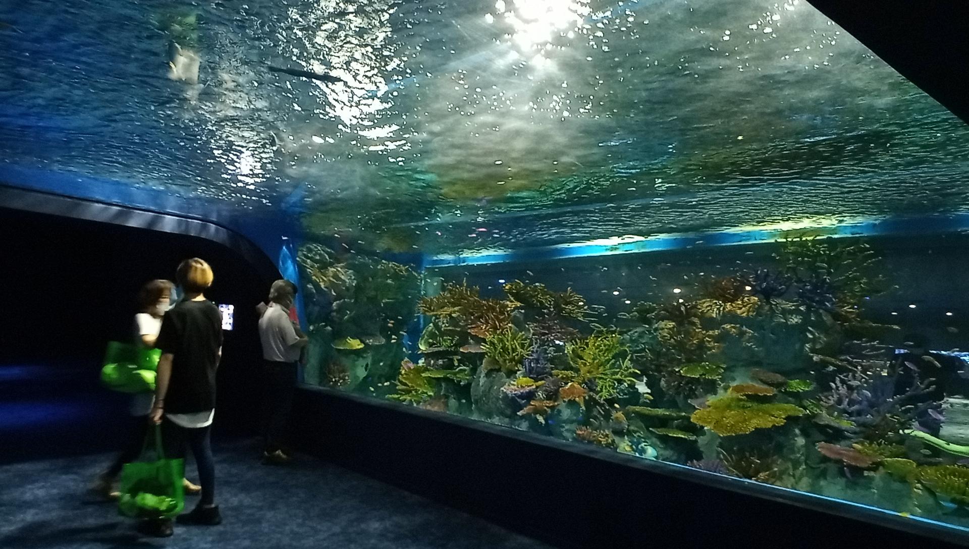 DMMかりゆし水族館の水中トンネル