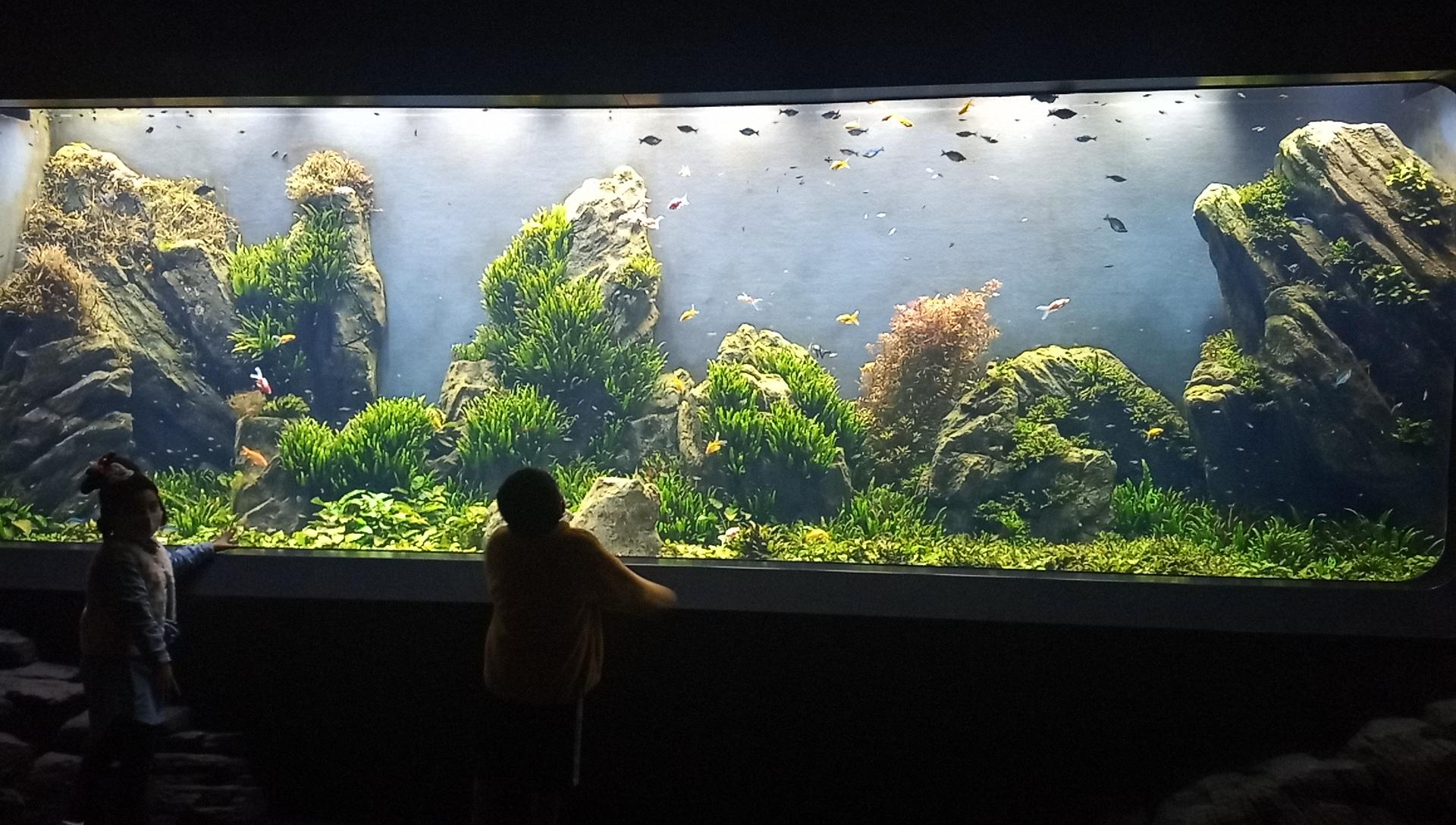 DMMかりゆし水族館に入って最初の水槽