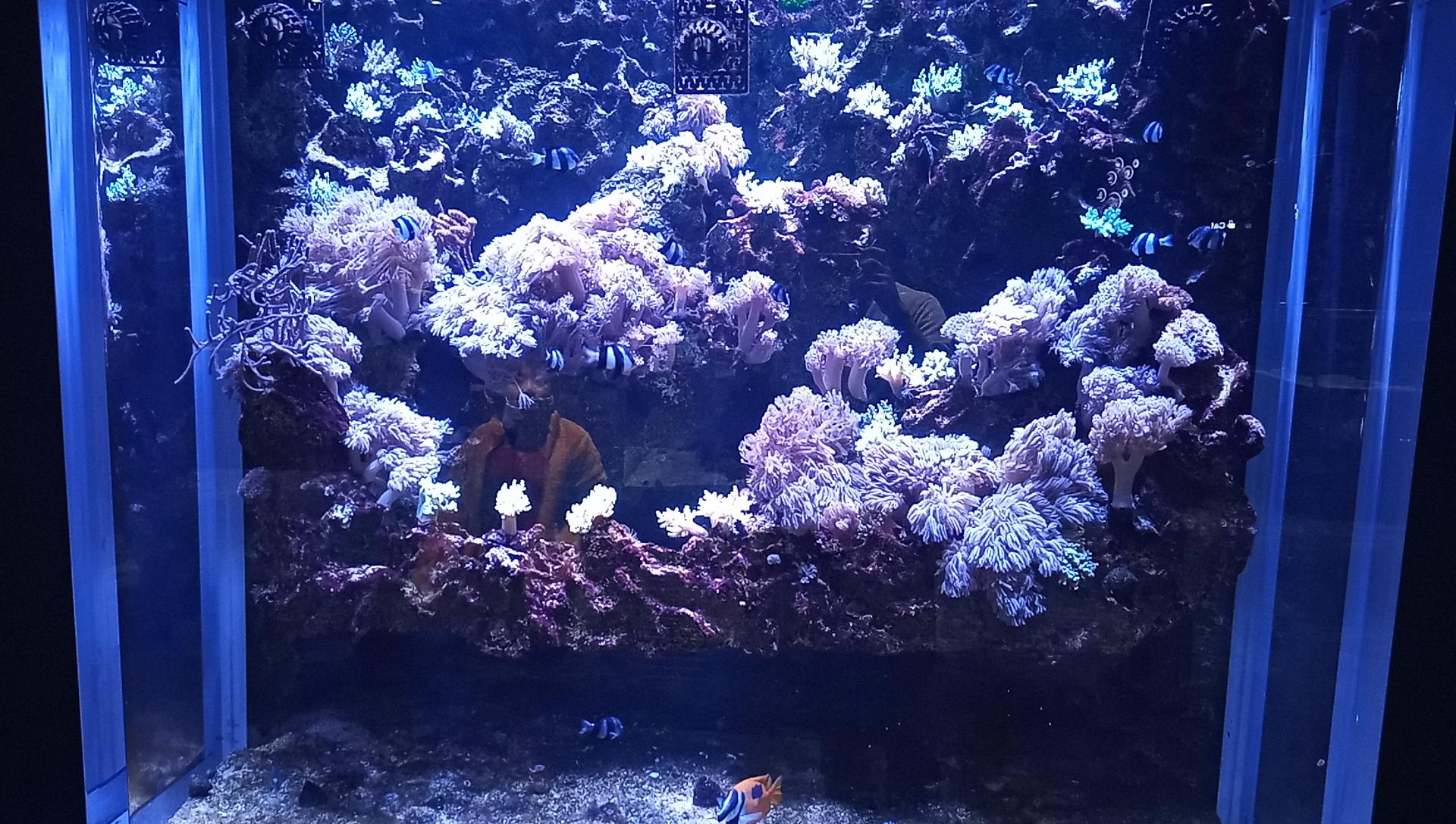 DMMかりゆし水族館の1階の海水水槽3