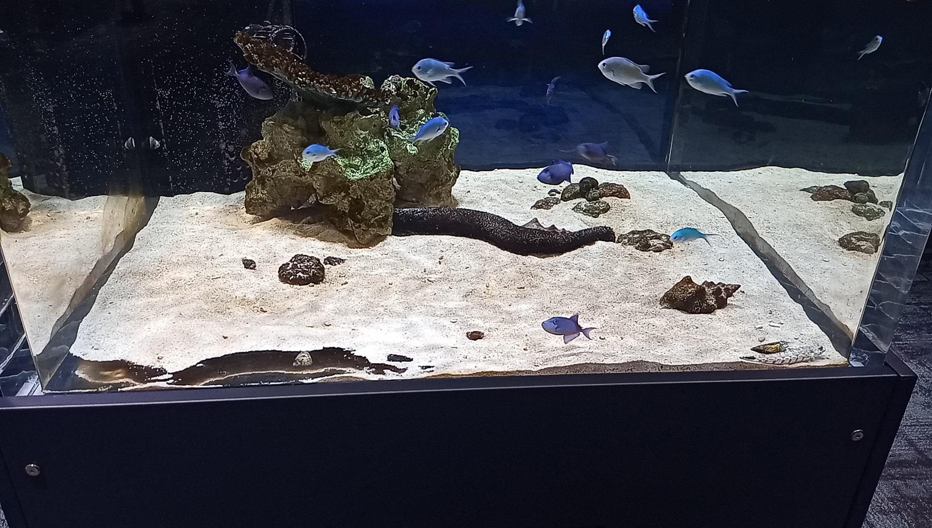 DMMかりゆし水族館の1階の海水水槽5